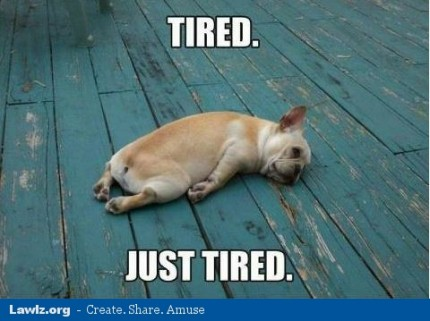 dog-just-tired-resting-funny-meme