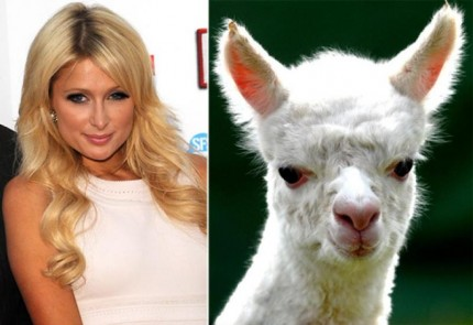 celebrities-that-look-like-animals-Paris-hilton