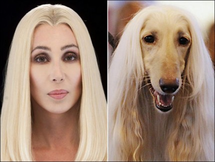 cher-look-likes-animal