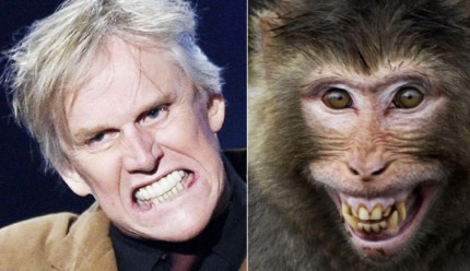 gal-animal-look-alikes-gary-busey