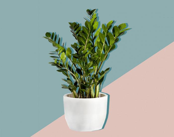 växter som ej behöver ljus