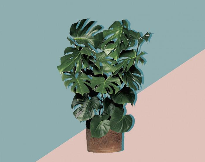Växter utan ljus