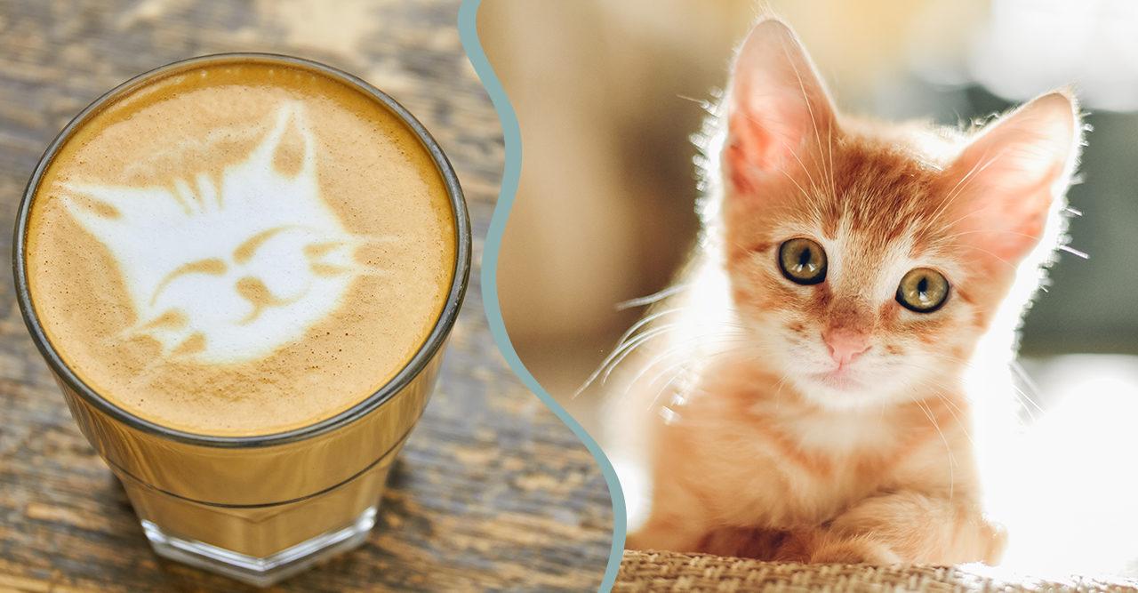 Kafe for kattalskare