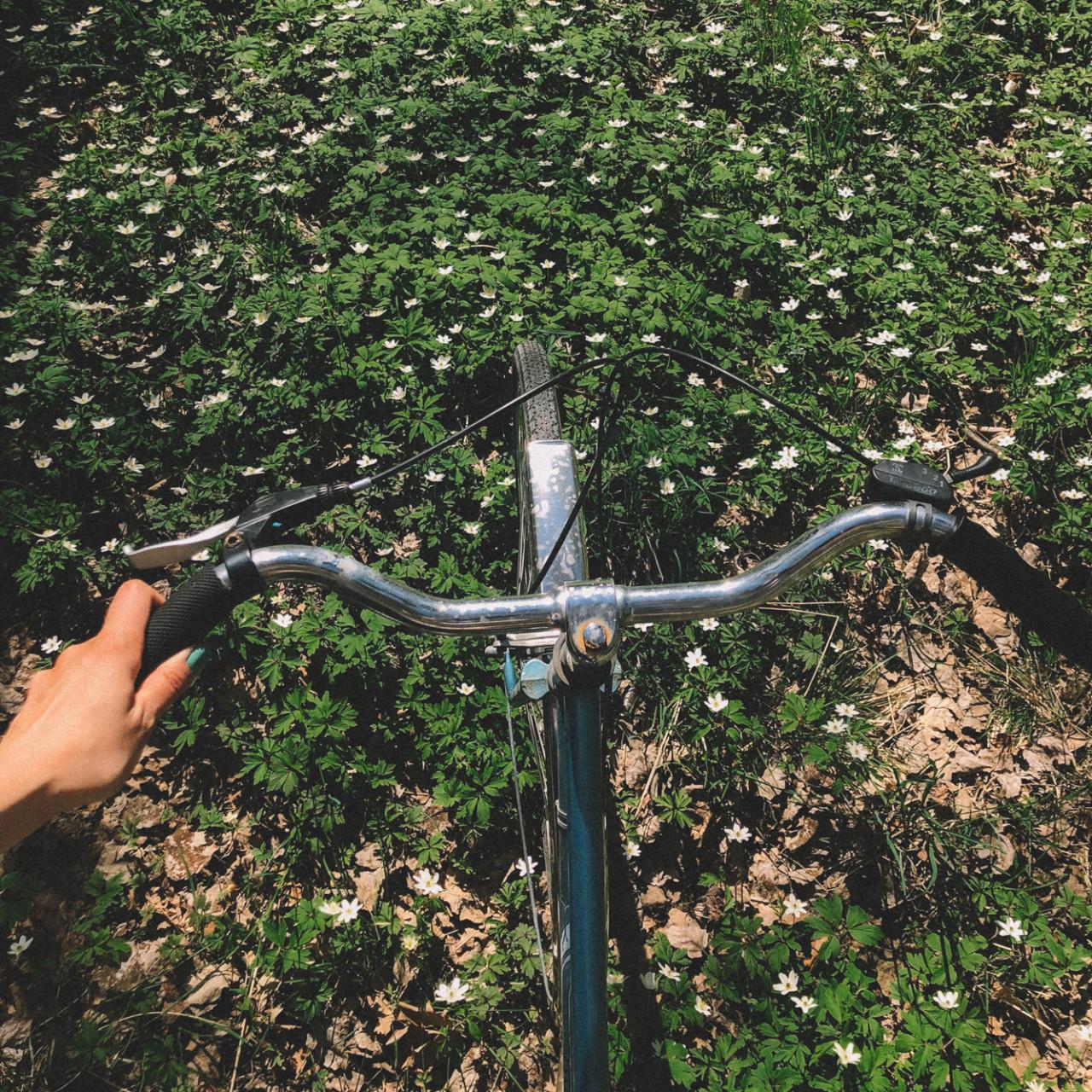 Frågor och svar om att cykla i stan, dela landställe med släkten och hitta samtalsämnen