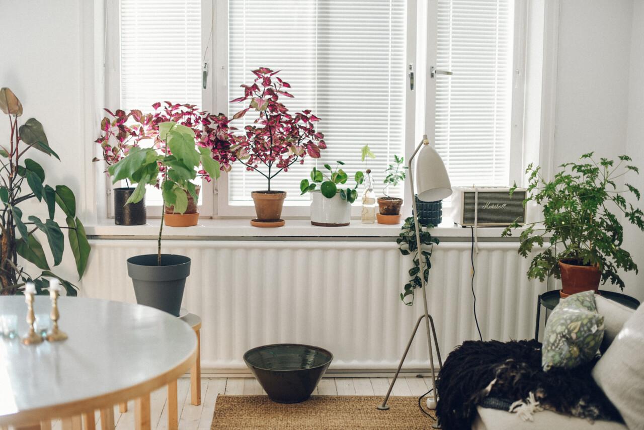 Mina växter (och hur jag typ tar hand om dem)