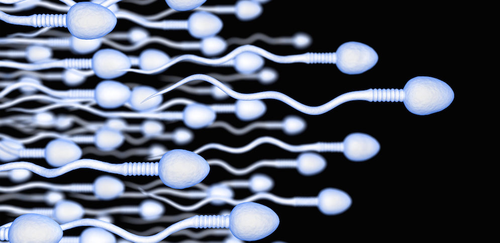 vad innehåller spermier